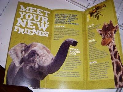 Zoo Brochure GRAPHIC DESIGN Pinterest Brochures And Zoos