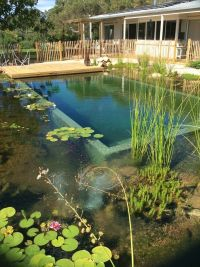 Best 20+ Natural Swimming Pools ideas on Pinterest ...