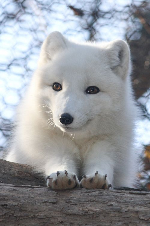 17 Best ideas about Arctic Tundra on Pinterest Arctic