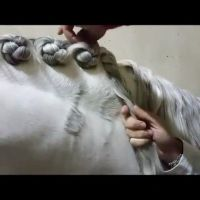 25+ best Horse Braiding ideas on Pinterest | Horse mane ...