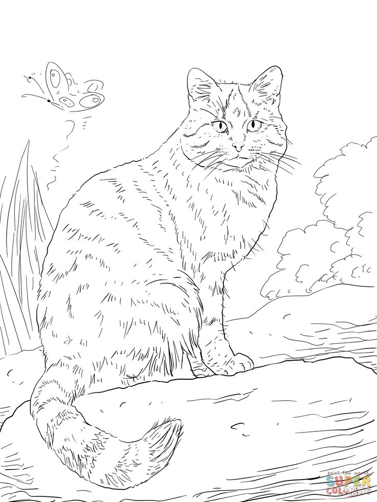 european wild cat coloring page,wild cats coloring pages