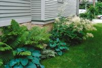 Fern and hosta for side yard | Gardens | Pinterest ...