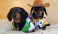 Best 25+ Dachshund costume ideas on Pinterest | Dachshund ...