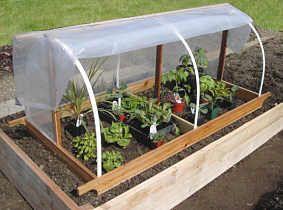 25 Best Ideas About Garden Cloche On Pinterest May 24