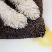 27 best images about Pet care on Pinterest   Pets, Cat pee ...