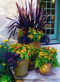 25+ Best Ideas about Potted Plants on Pinterest | Potted ...