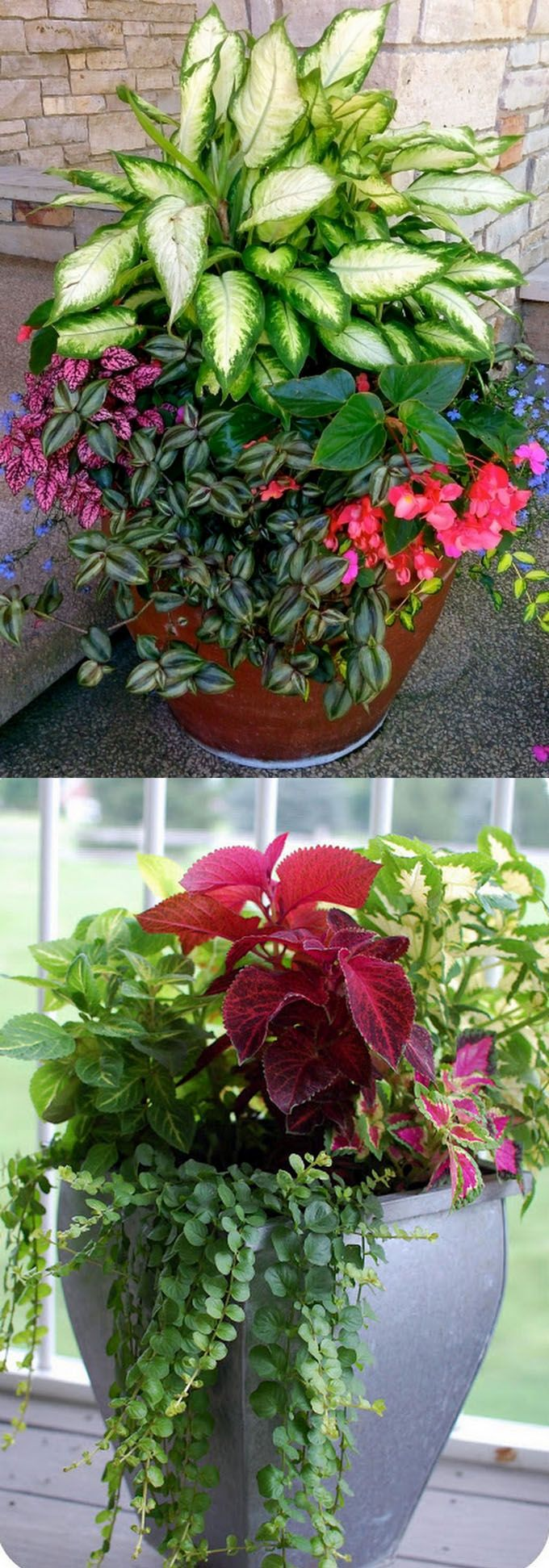 17 of 2017's best Potted Plants ideas on Pinterest