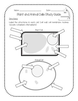 1000+ ideas about Plant Cell Labeled on Pinterest