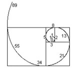 17 Best images about Fibonacci on Pinterest