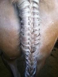 Horse Braid. Herringbone Braid.   Horse hairstyles ...