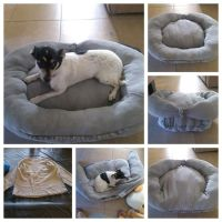 DIY dog bed made from old sweat shirt and some stuffings ...