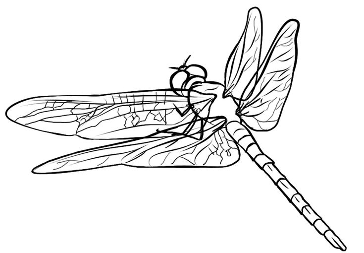 14 best images about Dragonfly crafts for kids on