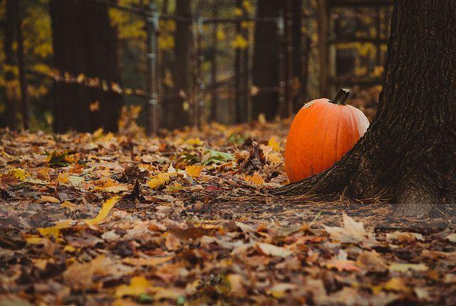 Fall Witch Wallpaper Elegant Autumn Autumn Darling Autumn Blog All Year