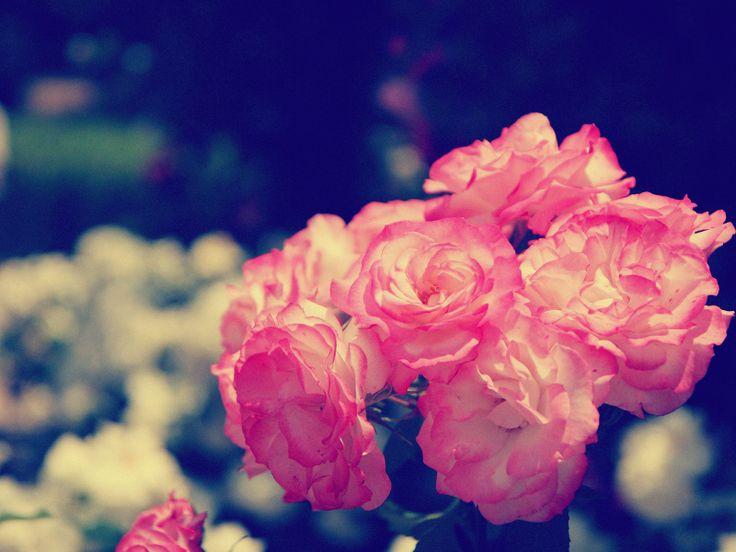 Blumen Tumblr Hintergrund Free Hd Desktop Wallpapers For