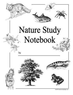 Best 20+ Nature study ideas on Pinterest