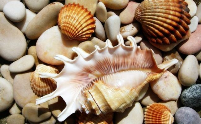 112 Best Images About Beyond The Sea On Pinterest