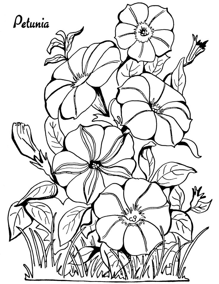 2681 Best Images About Coloring Pages