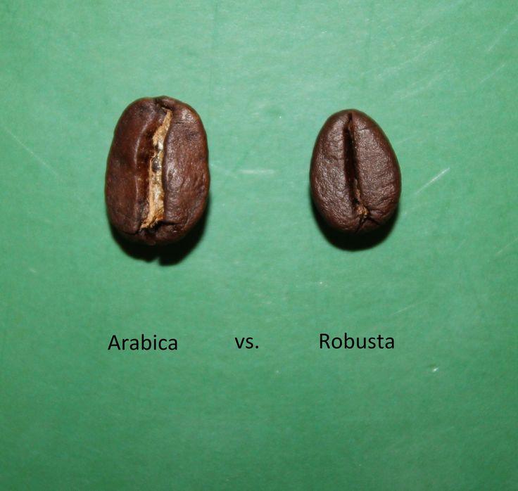 robusta vs arabica | Coffee | Pinterest