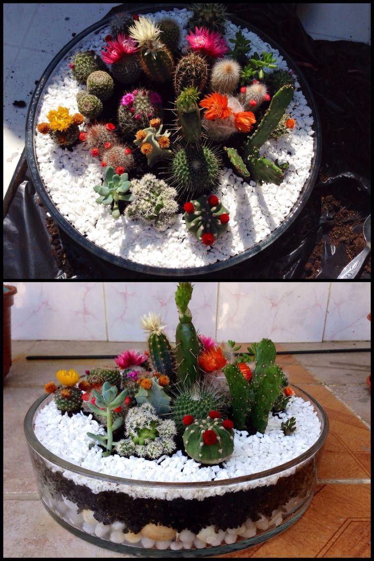 25 Best Ideas About Cacti Garden On Pinterest Outdoor Cactus