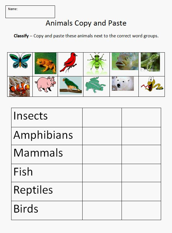 25+ best ideas about Animal classification on Pinterest