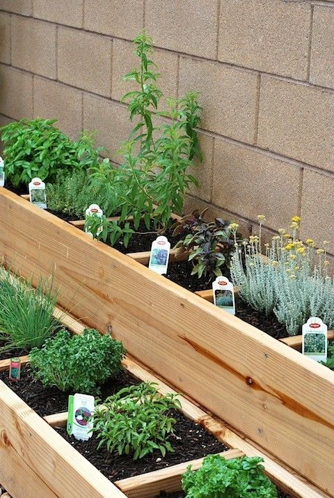 25 Best Ideas About Patio Herb Gardens On Pinterest Growing