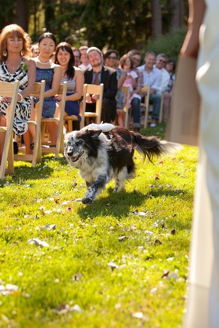 1000 images about Surprise Wedding Ring Bearers on