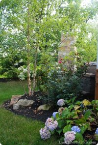 River birch trees -- love the bark! | Gardening ...