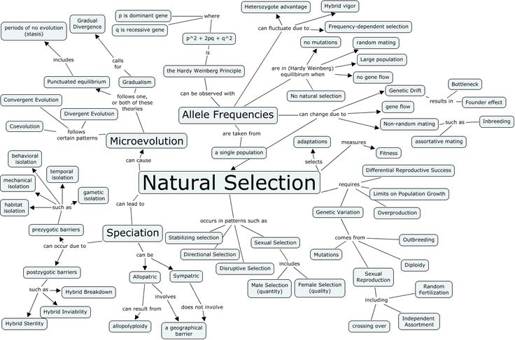 Evolution: Evolution Concept Map