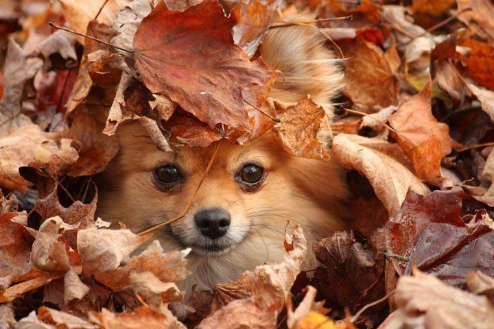 Fall Kitten Wallpaper 12 Reasons Why You Should Never Own Pomeranians Animals