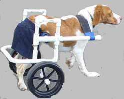 As dogs get elderly and arthritis or other hip challenges increase, a DIY dog wheelchair might help you extend your dog's life.