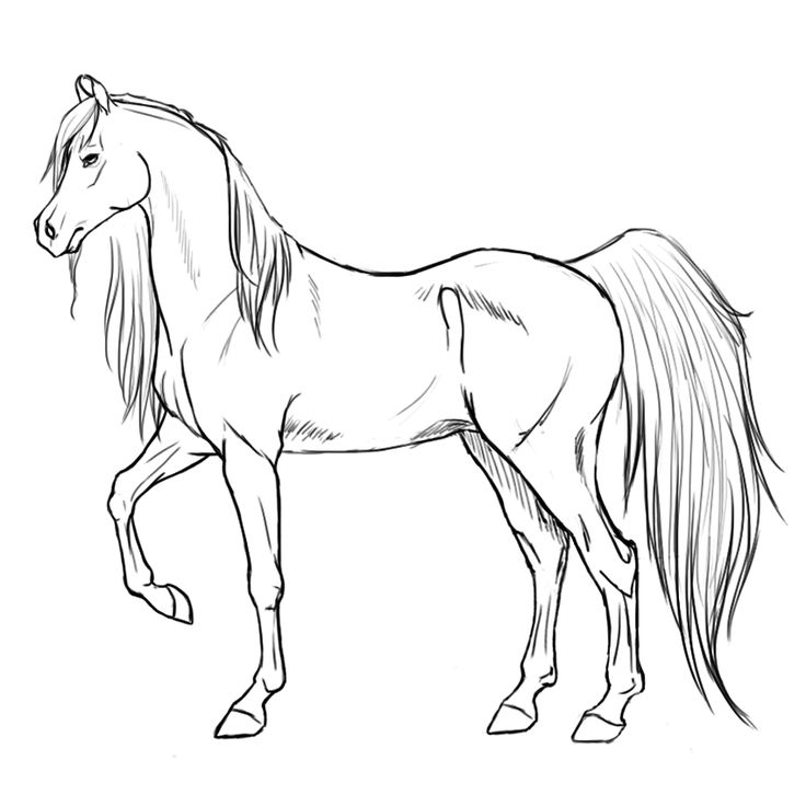 17 Best images about Coloring Pages Of Horses on Pinterest