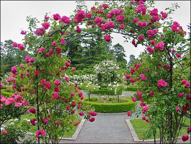 The 63 Best Images About Rose Garden On Pinterest Gardens Blue