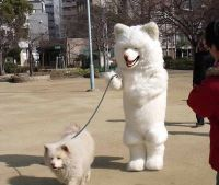 215 best Ridiculous dog costumes images on Pinterest