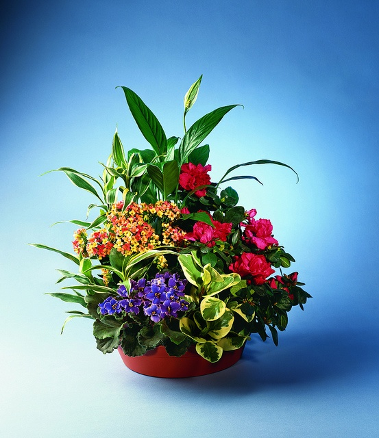 1000 Images About Flowers Amp Plants For The Workplace On