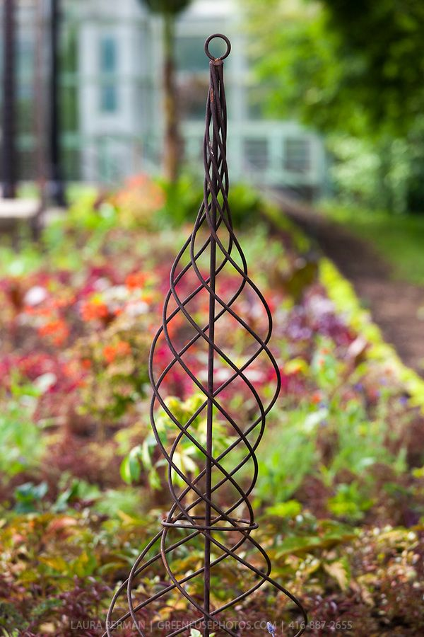 A Spiral Wrought Iron Climbing Plant Support Adds A Formal