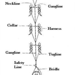 Iditarod Dog Sled Diagram 1990 Club Car Ds Wiring Lines And Harnesses For Sledding, Alaska | Dogsledding Pinterest Maze, Dogs ...