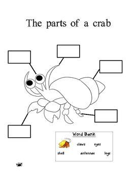 25+ best ideas about Crab craft preschool on Pinterest