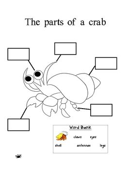Crabs, Circle time and Hermit crabs on Pinterest
