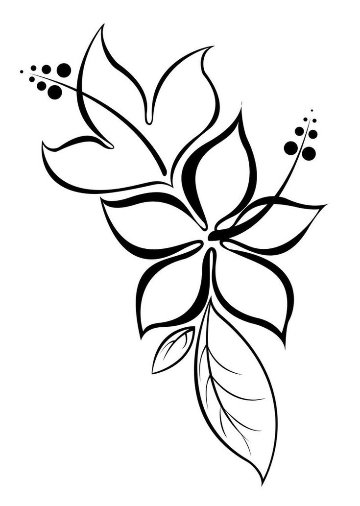 simple hibiscus drawing, with or without color, for