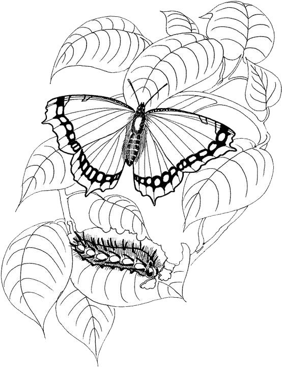 1000+ images about Butterfly embroidery patterns on