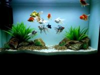 25+ best ideas about Goldfish tank on Pinterest | Indoor ...