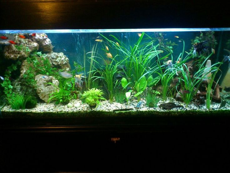 Fish tank idea freshwater aquariums pinterest fish