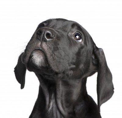 2373 best Doggies images on Pinterest