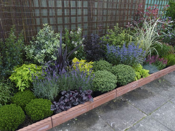 25 Best Ideas About Border Plants On Pinterest Landscaping