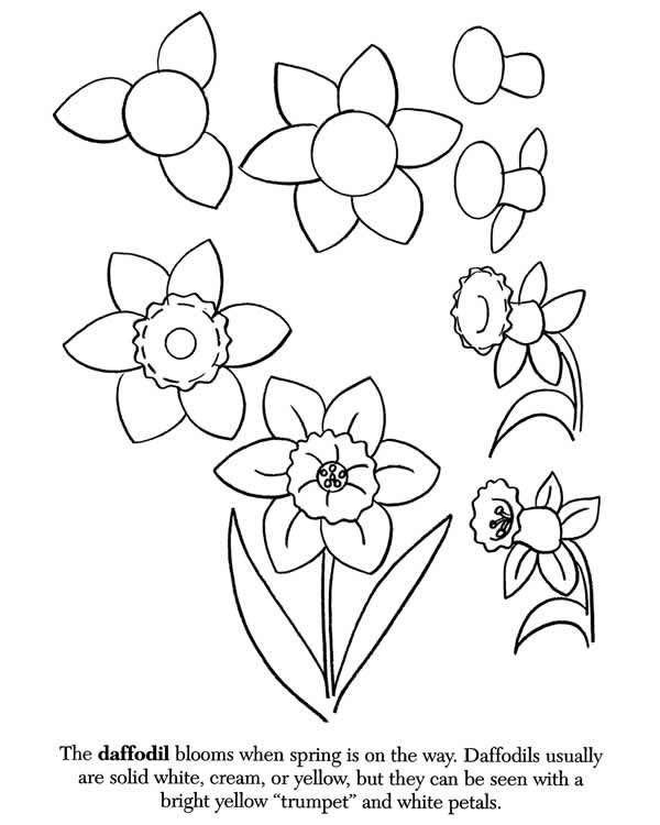 17 Best ideas about How To Draw Flowers on Pinterest