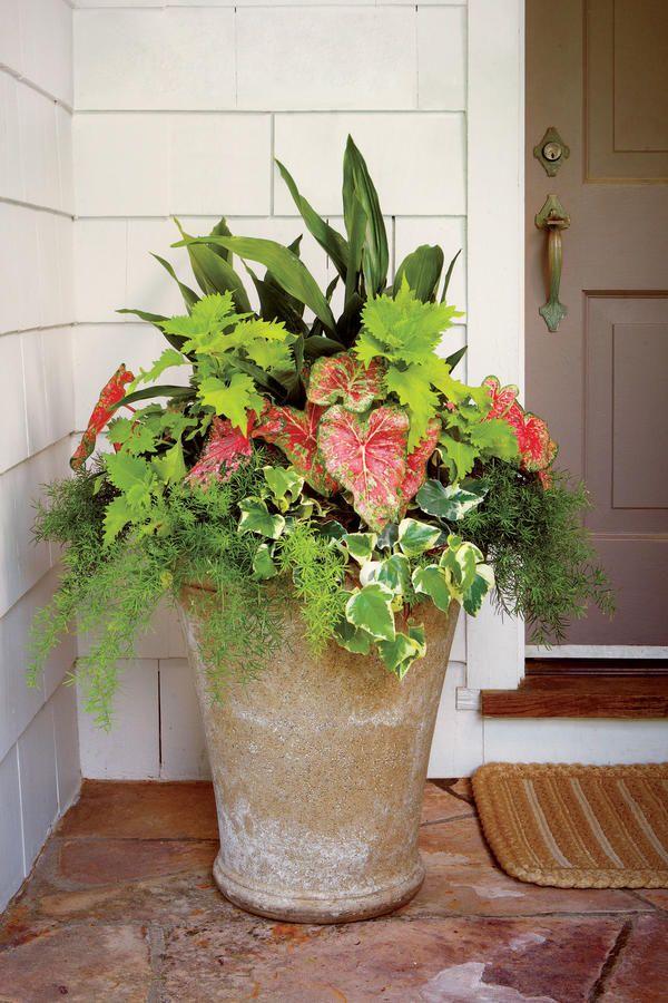 25 Best Ideas About Container Gardening On Pinterest Gardening
