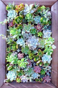 Best 25+ Succulent wall ideas on Pinterest   Succulent ...