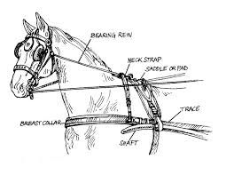 24 best images about BAN Bearing Reins!!! on Pinterest