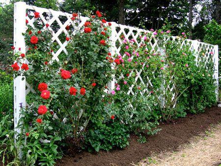 25 Best Ideas About Lattice Garden On Pinterest Privacy Trellis