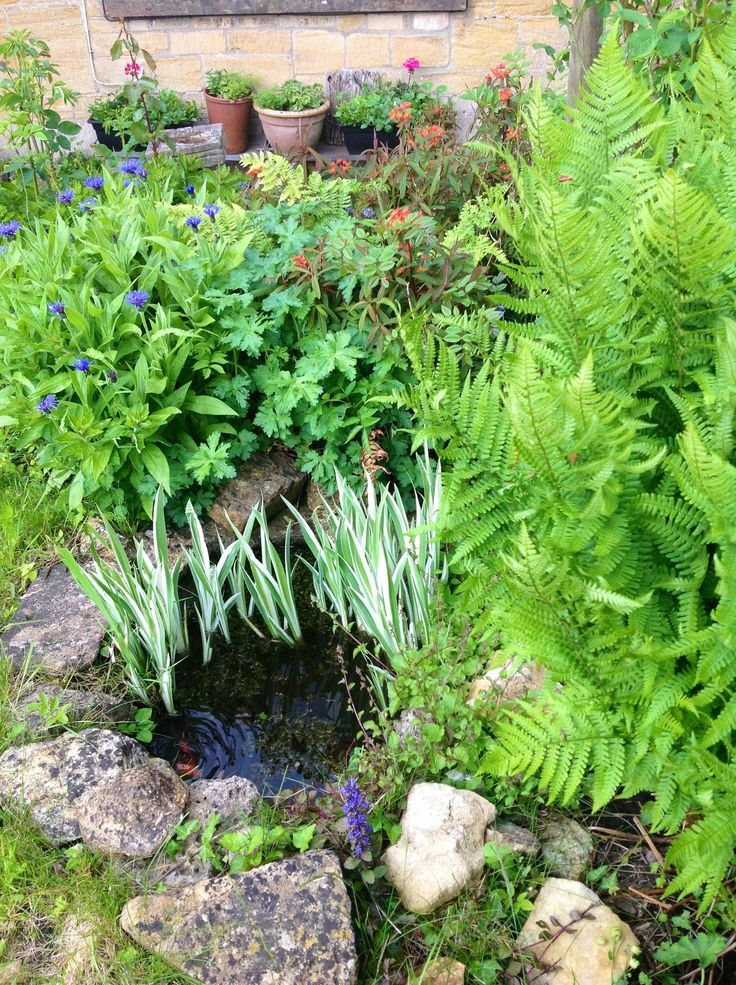 25 Best Ideas About Small Garden Ponds On Pinterest Small